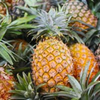 ananas (25 pièces)