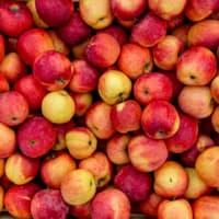 pommes (100 kg)