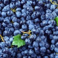 druiven blauw (30 kg)
